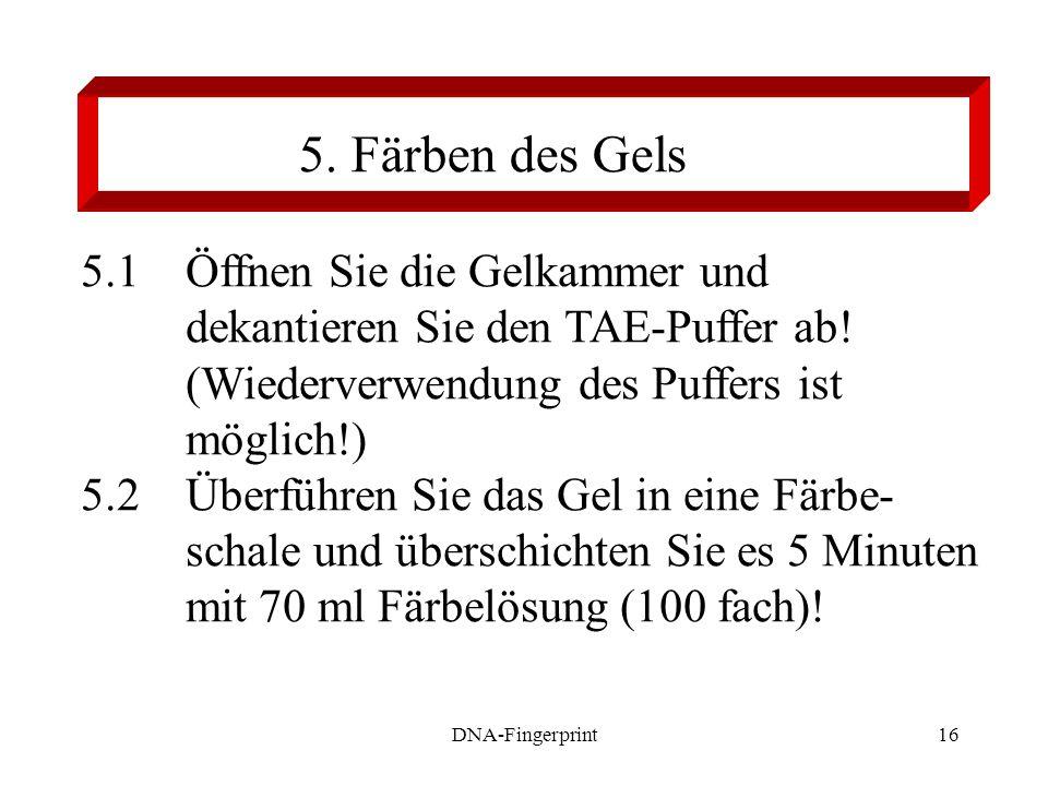 5. Färben des Gels 5.1 Öffnen Sie die Gelkammer und dekantieren Sie den TAE-Puffer ab! (Wiederverwendung des Puffers ist möglich!)