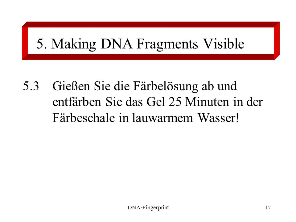 5. Making DNA Fragments Visible