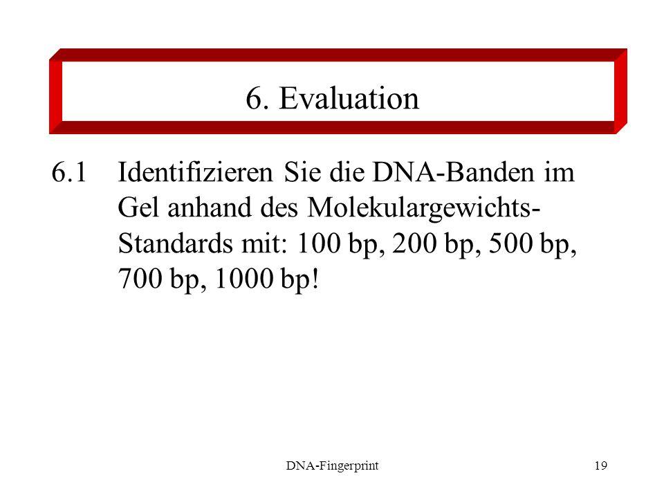 6. Evaluation 6.1 Identifizieren Sie die DNA-Banden im Gel anhand des Molekulargewichts- Standards mit: 100 bp, 200 bp, 500 bp, 700 bp, 1000 bp!