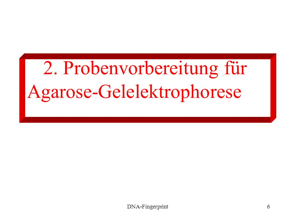 2. Probenvorbereitung für Agarose-Gelelektrophorese