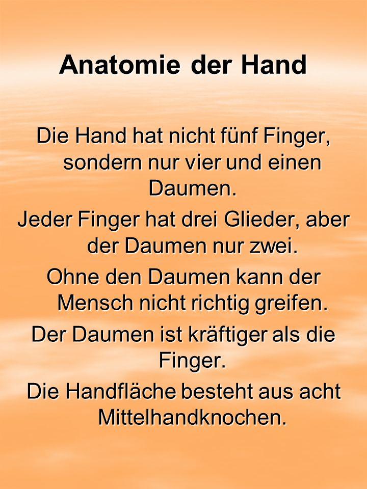 Anatomie der Hand Die Hand hat nicht fünf Finger, sondern nur vier und einen Daumen. Jeder Finger hat drei Glieder, aber der Daumen nur zwei.
