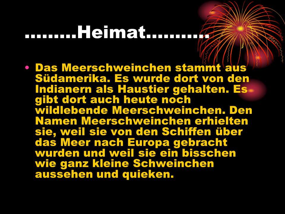 ………Heimat………..