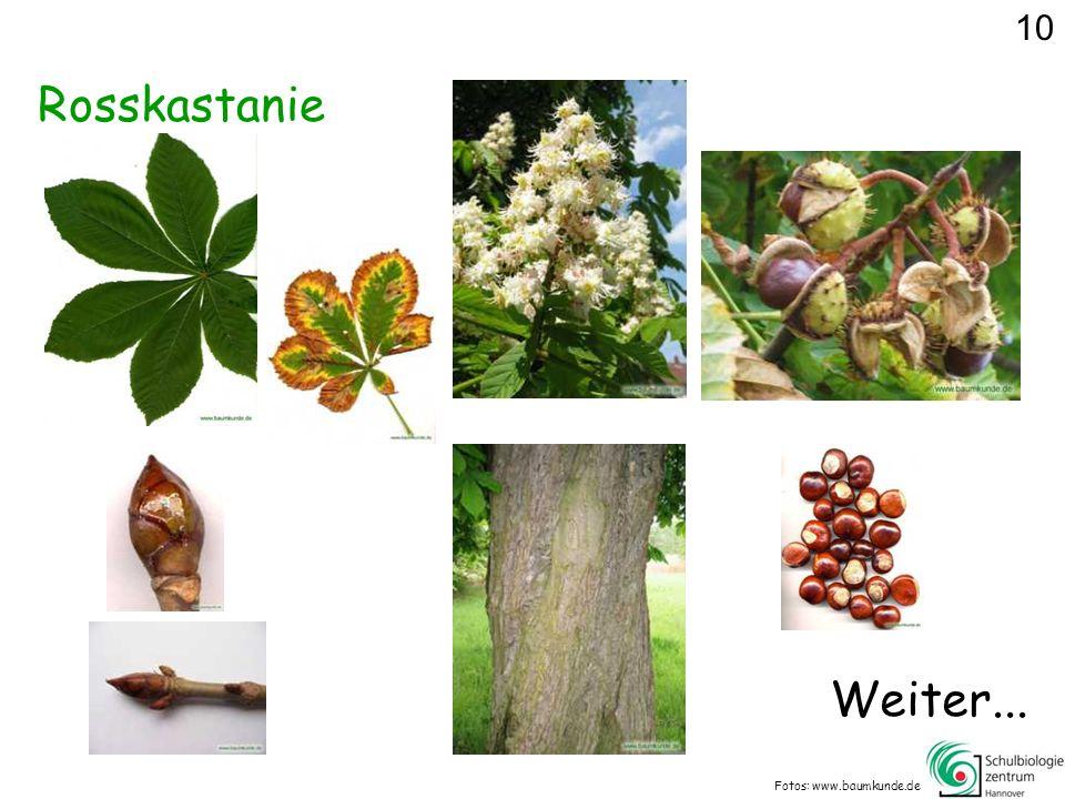 10 Rosskastanie Weiter... Fotos: www.baumkunde.de