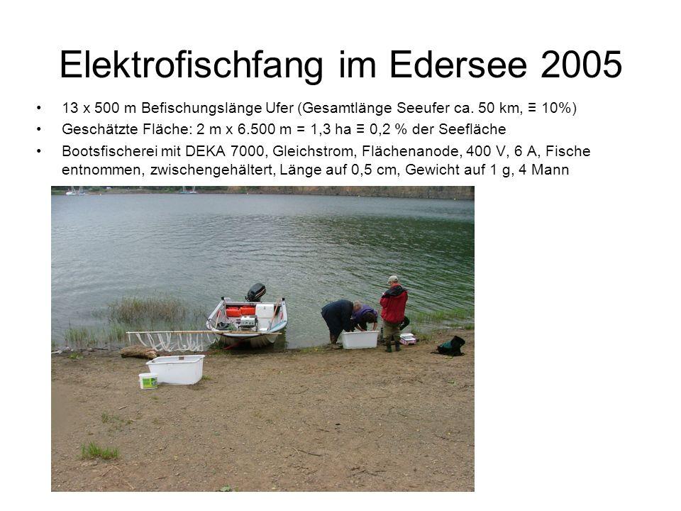 Elektrofischfang im Edersee 2005