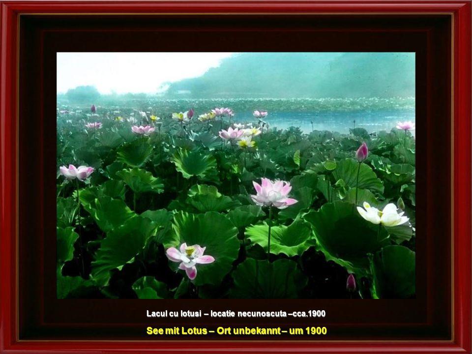 See mit Lotus – Ort unbekannt – um 1900