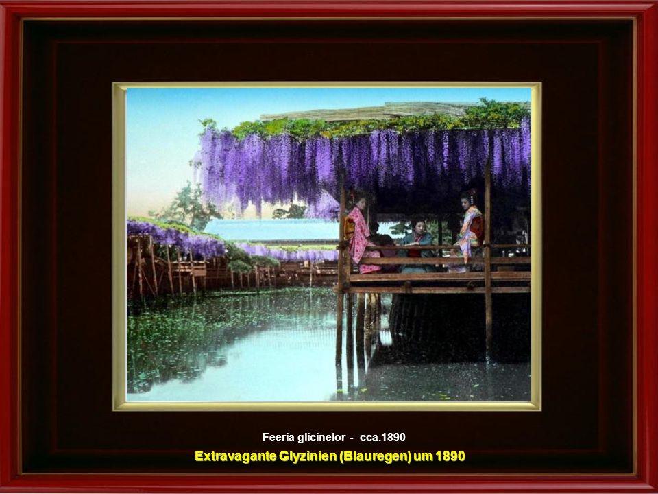Extravagante Glyzinien (Blauregen) um 1890