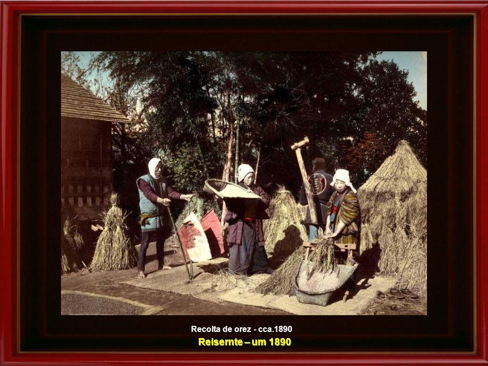 Recolta de orez - cca.1890 Reisernte – um 1890