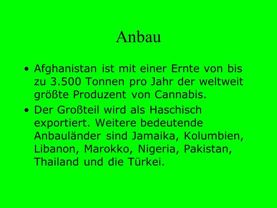 Anbau Afghanistan ist mit einer Ernte von bis zu 3.500 Tonnen pro Jahr der weltweit größte Produzent von Cannabis.