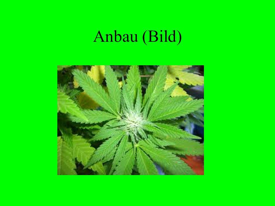 Anbau (Bild)