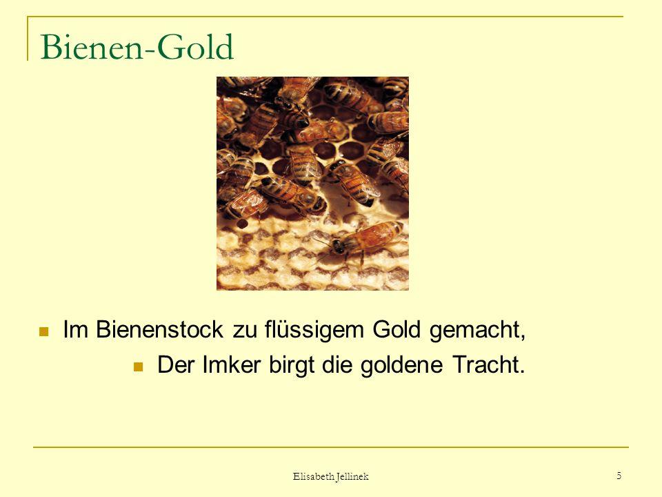 Der Imker birgt die goldene Tracht.