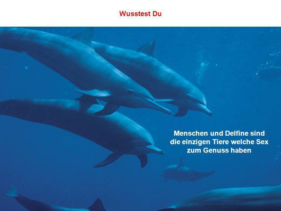 Wusstest Du Menschen und Delfine sind die einzigen Tiere welche Sex zum Genuss haben