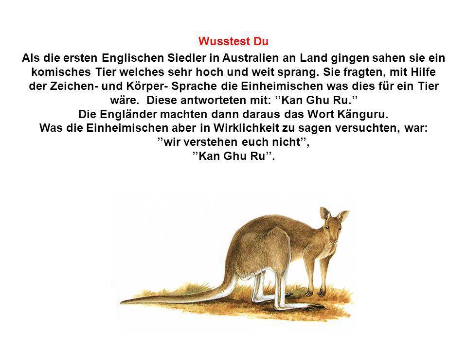 Die Engländer machten dann daraus das Wort Känguru.