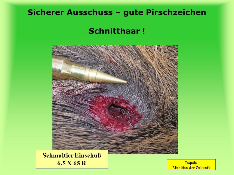 Sicherer Ausschuss – gute Pirschzeichen Schnitthaar !