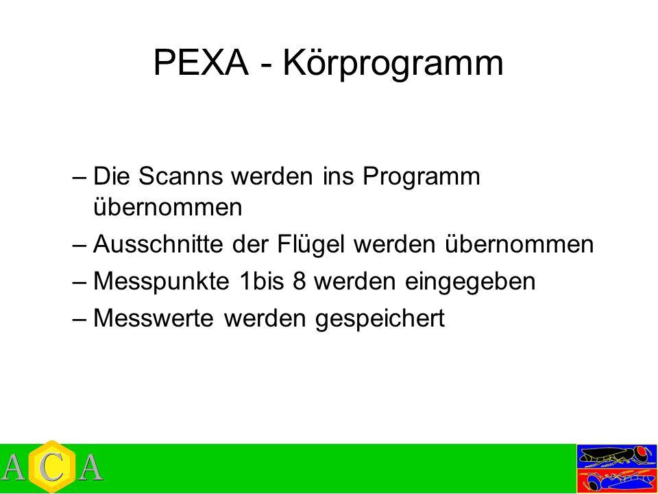 PEXA - Körprogramm Die Scanns werden ins Programm übernommen