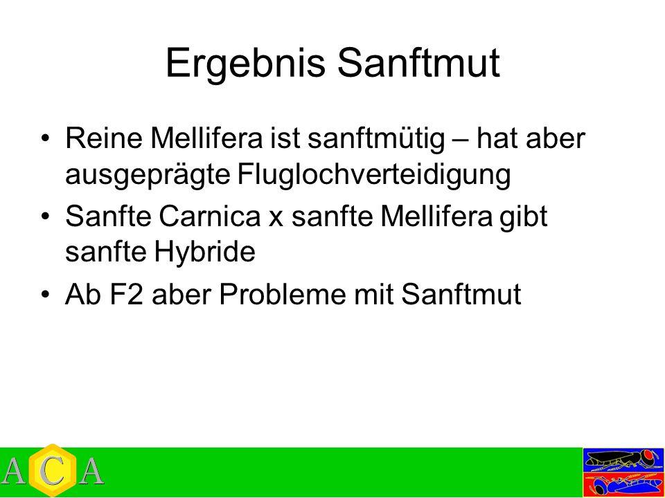 Ergebnis Sanftmut Reine Mellifera ist sanftmütig – hat aber ausgeprägte Fluglochverteidigung. Sanfte Carnica x sanfte Mellifera gibt sanfte Hybride.