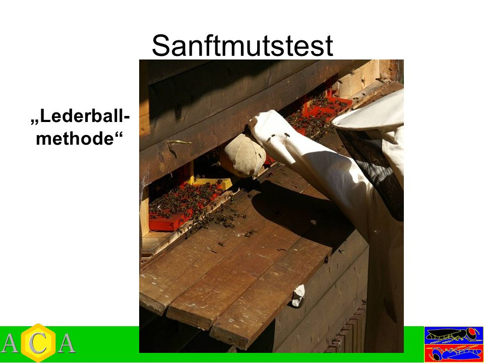 "Sanftmutstest ""Lederball-methode"