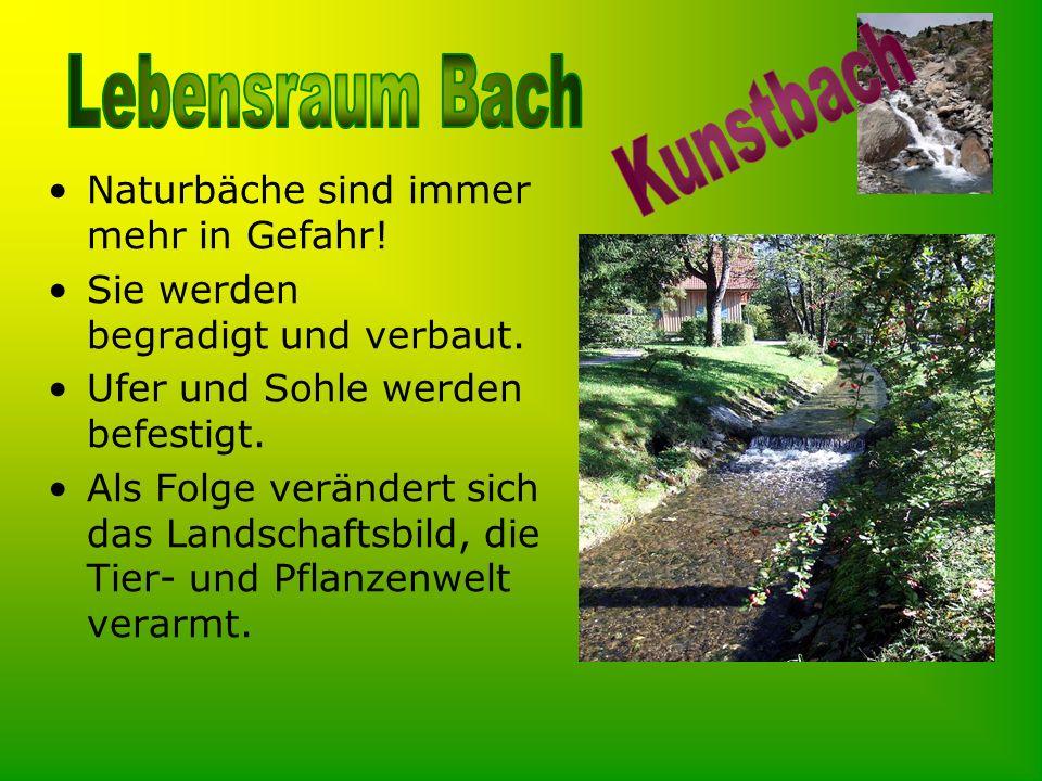 Kunstbach Naturbäche sind immer mehr in Gefahr!