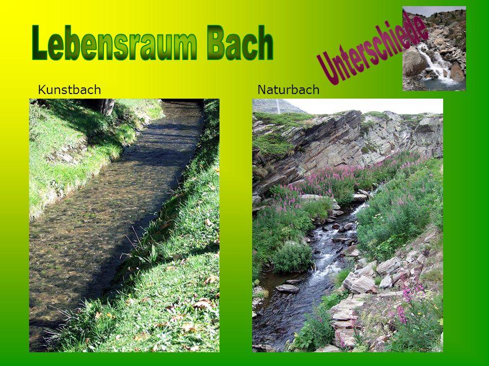 Unterschiede Kunstbach Naturbach