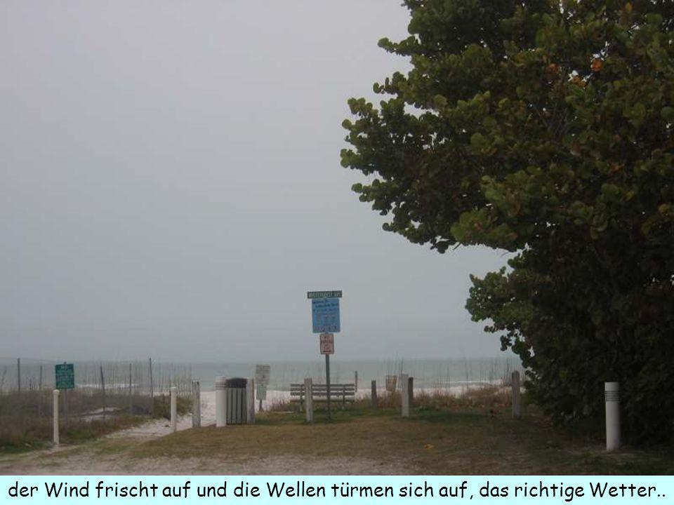 der Wind frischt auf und die Wellen türmen sich auf, das richtige Wetter..