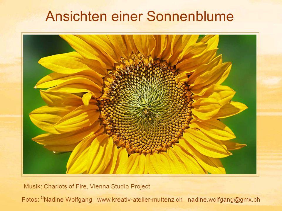 Ansichten einer Sonnenblume