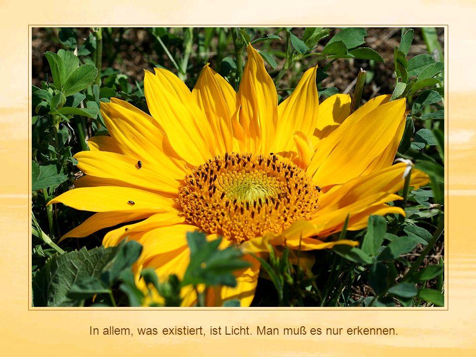 In allem, was existiert, ist Licht. Man muß es nur erkennen.