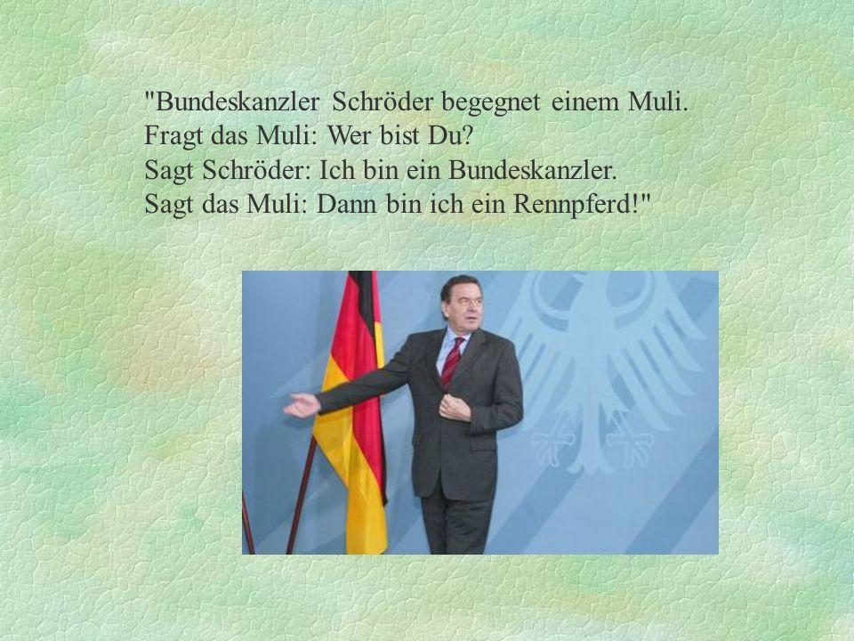 Bundeskanzler Schröder begegnet einem Muli.