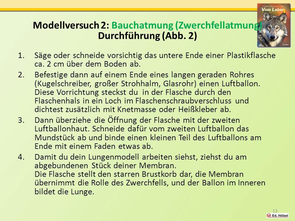 Modellversuch 2: Bauchatmung (Zwerchfellatmung)