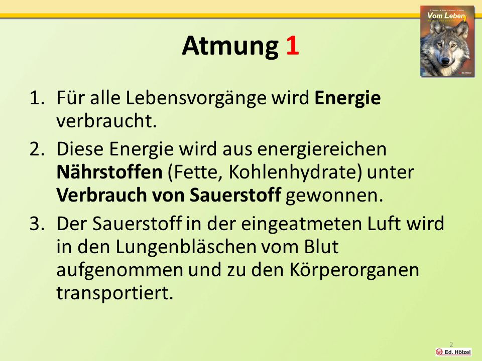 Atmung 1 Für alle Lebensvorgänge wird Energie verbraucht.
