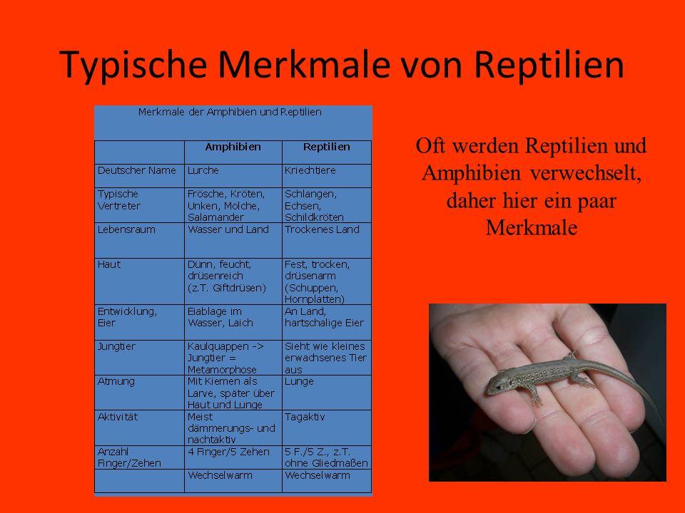 Typische Merkmale von Reptilien