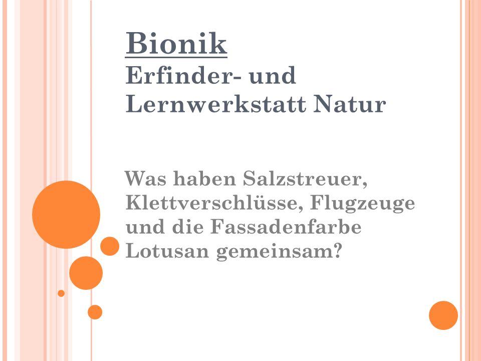 Bionik Erfinder- und Lernwerkstatt Natur Was haben Salzstreuer, Klettverschlüsse, Flugzeuge und die Fassadenfarbe Lotusan gemeinsam