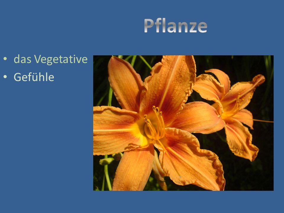 Pflanze das Vegetative Gefühle Pflanze – das Vegetative - Gefühle