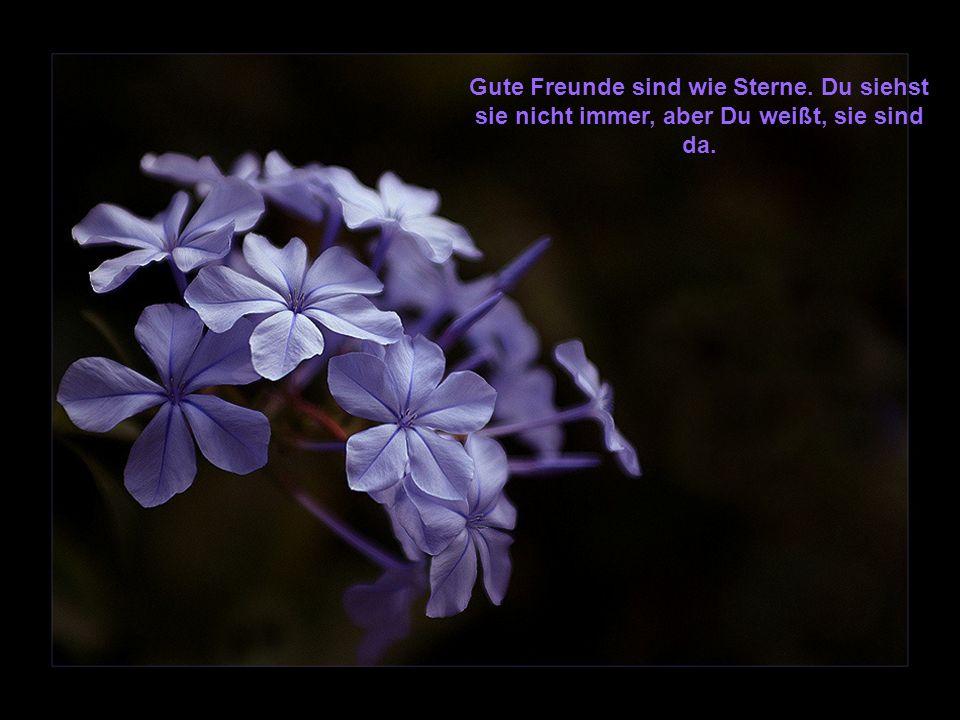 Gute Freunde sind wie Sterne