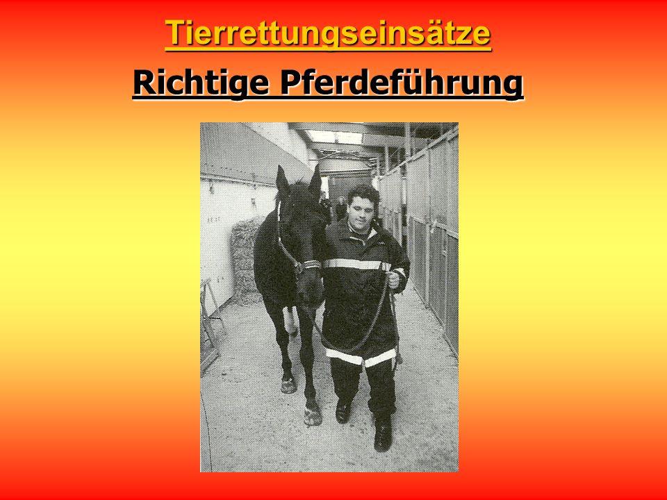 Richtige Pferdeführung