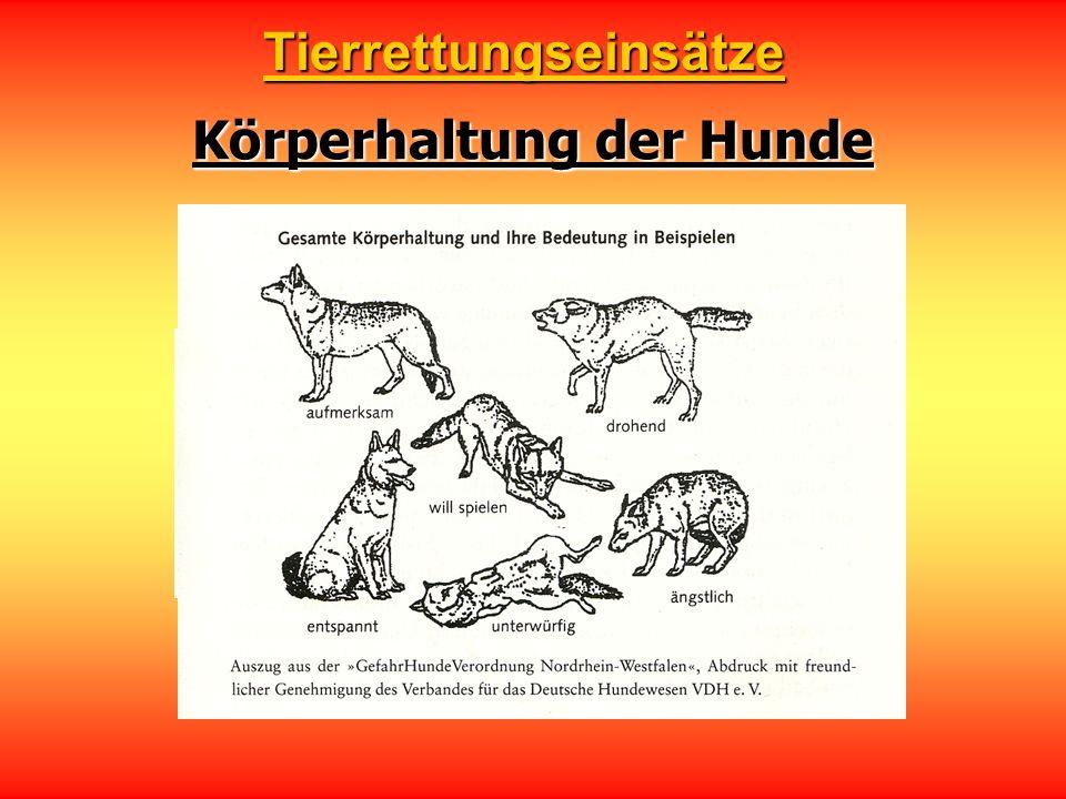 Körperhaltung der Hunde