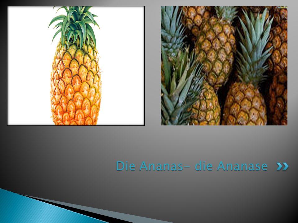 Die Ananas- die Ananase