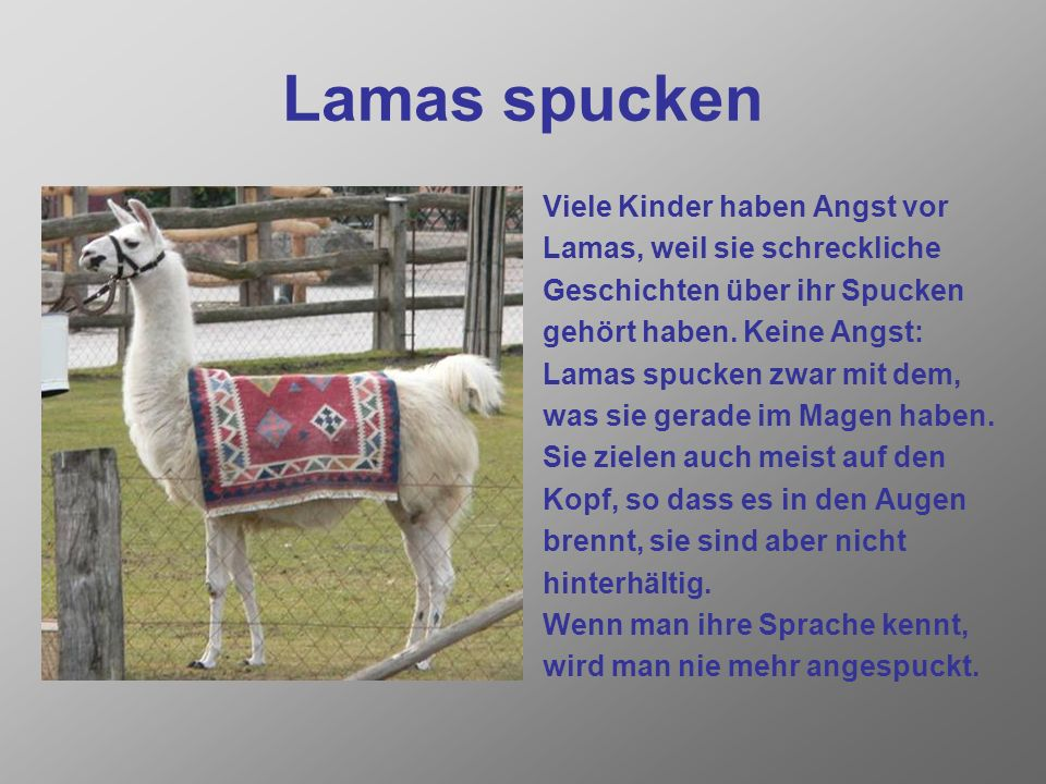 Lamas spucken Viele Kinder haben Angst vor