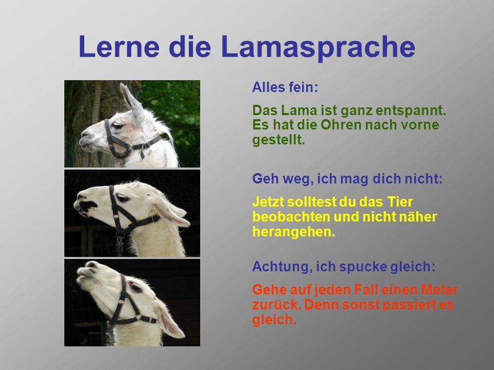 Lerne die Lamasprache