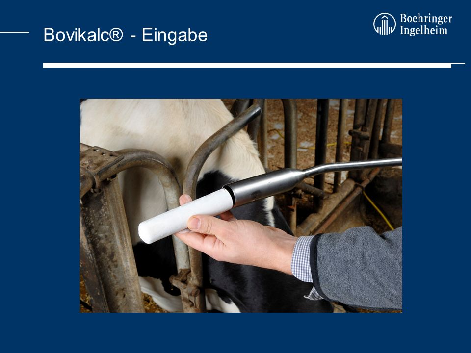 Bovikalc® - Eingabe
