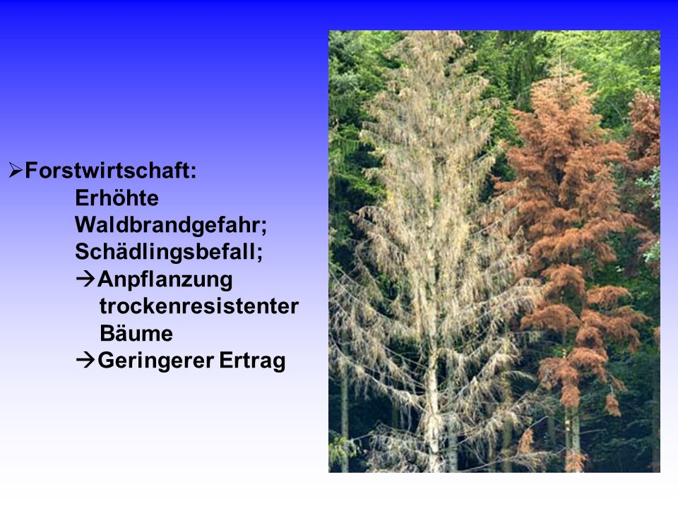 Forstwirtschaft: Erhöhte Waldbrandgefahr; Schädlingsbefall; Anpflanzung trockenresistenter Bäume Geringerer Ertrag.