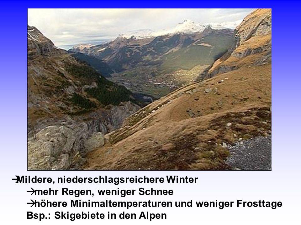 Mildere, niederschlagsreichere Winter