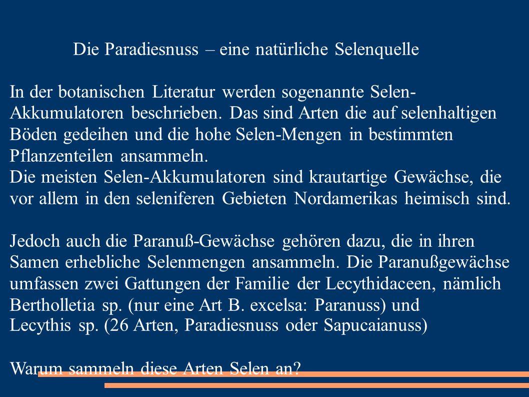Bertholletia sp. (nur eine Art B. excelsa: Paranuss) und
