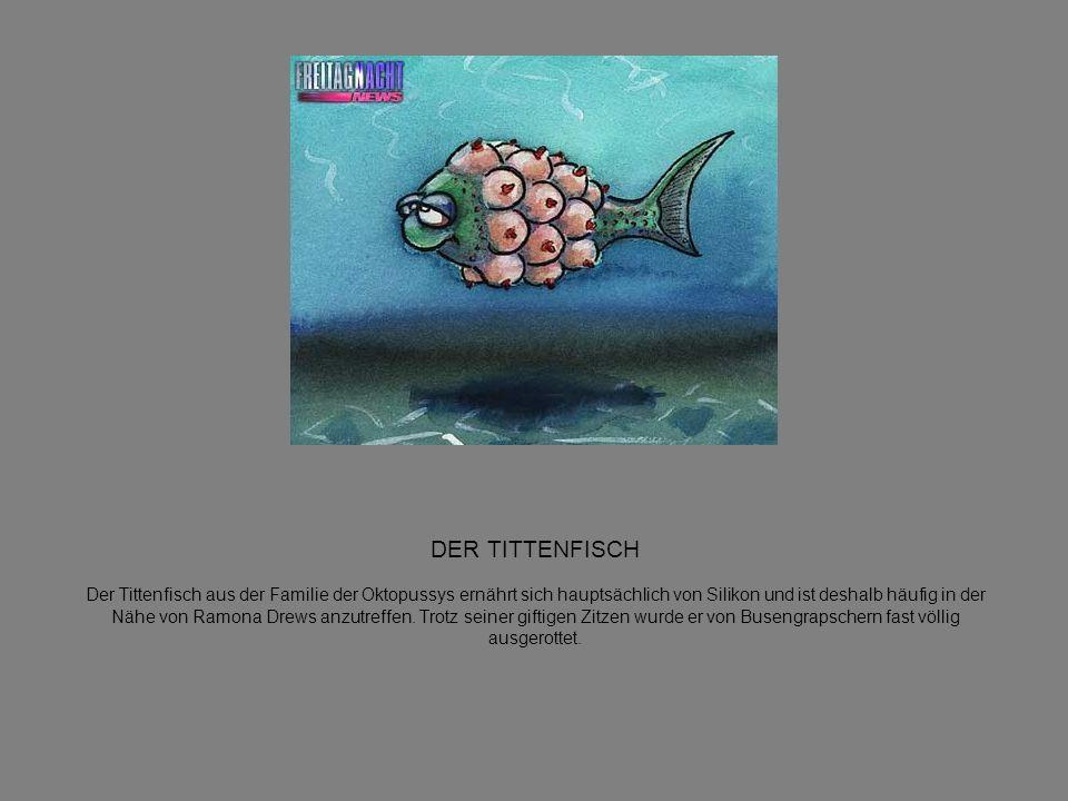 DER TITTENFISCH Der Tittenfisch aus der Familie der Oktopussys ernährt sich hauptsächlich von Silikon und ist deshalb häufig in der Nähe von Ramona Drews anzutreffen.