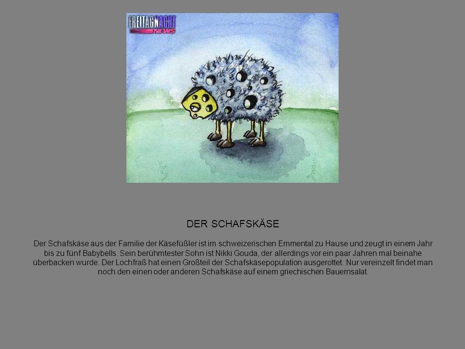 DER SCHAFSKÄSE Der Schafskäse aus der Familie der Käsefüßler ist im schweizerischen Emmental zu Hause und zeugt in einem Jahr bis zu fünf Babybells.