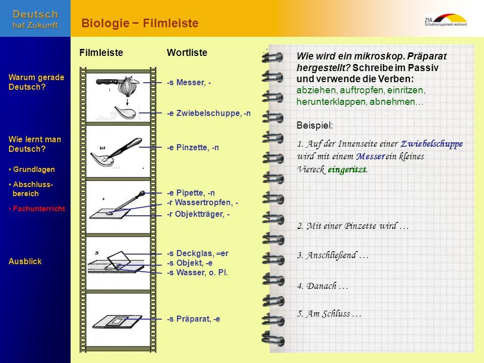 Biologie − Filmleiste 1. Auf der Innenseite einer Zwiebelschuppe
