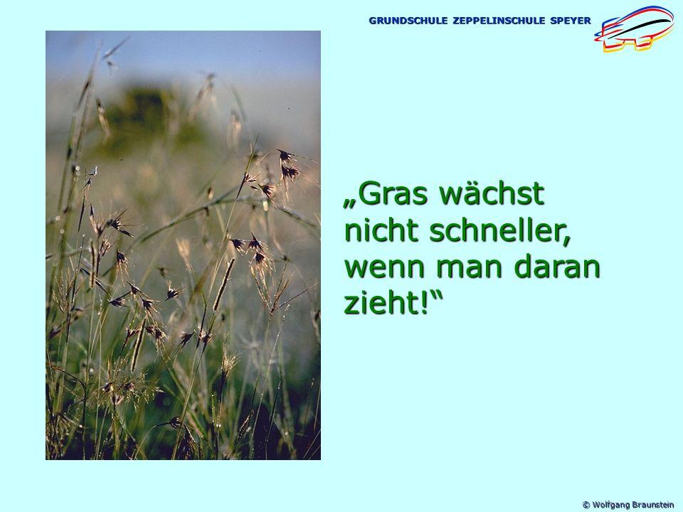 """""""Gras wächst nicht schneller, wenn man daran zieht!"""