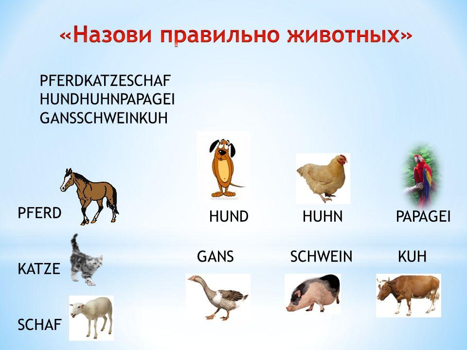 «Назови правильно животных»