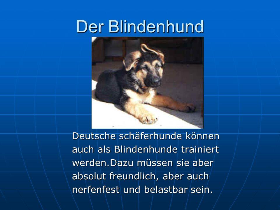 Der Blindenhund Deutsche schäferhunde können