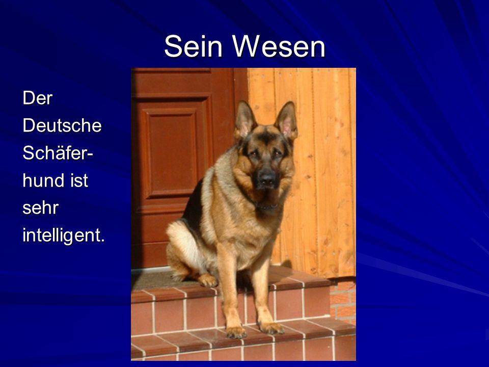 Sein Wesen Der Deutsche Schäfer- hund ist sehr intelligent.