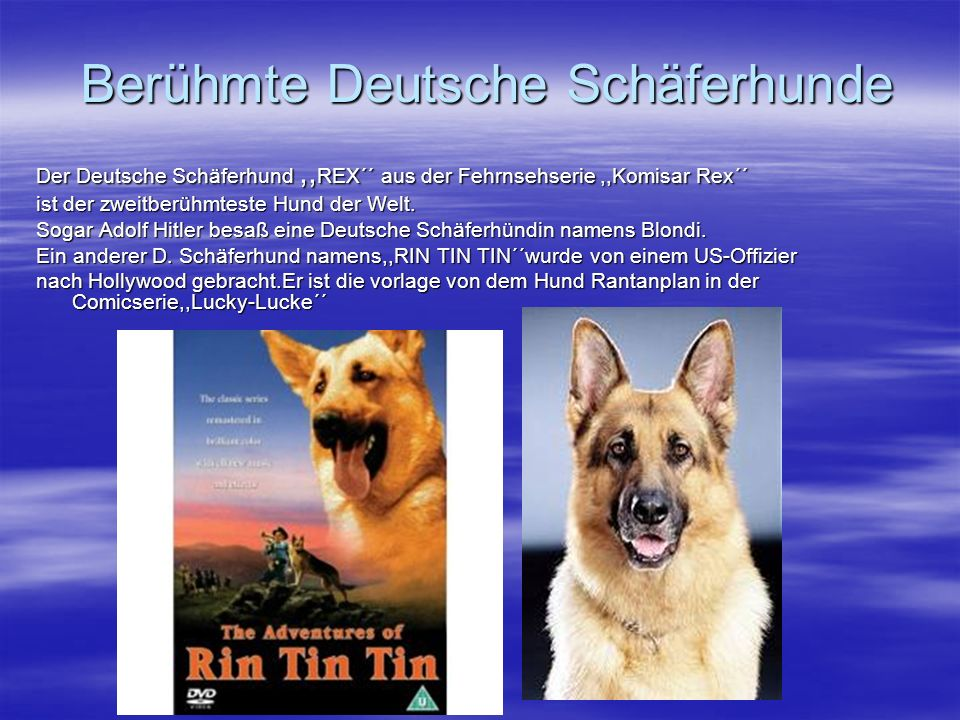 Berühmte Deutsche Schäferhunde
