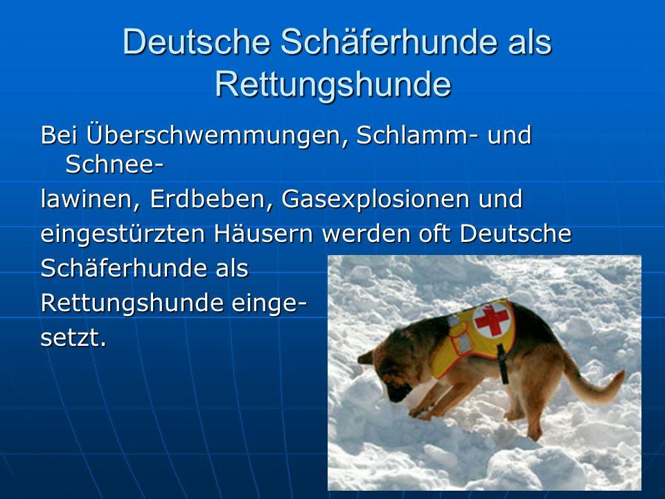Deutsche Schäferhunde als Rettungshunde